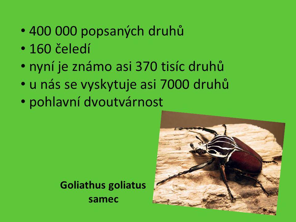 400 000 popsaných druhů 160 čeledí nyní je známo asi 370 tisíc druhů u nás se vyskytuje asi 7000 druhů pohlavní dvoutvárnost Goliathus goliatus samec