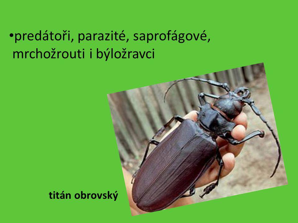 predátoři, parazité, saprofágové, mrchožrouti i býložravci titán obrovský