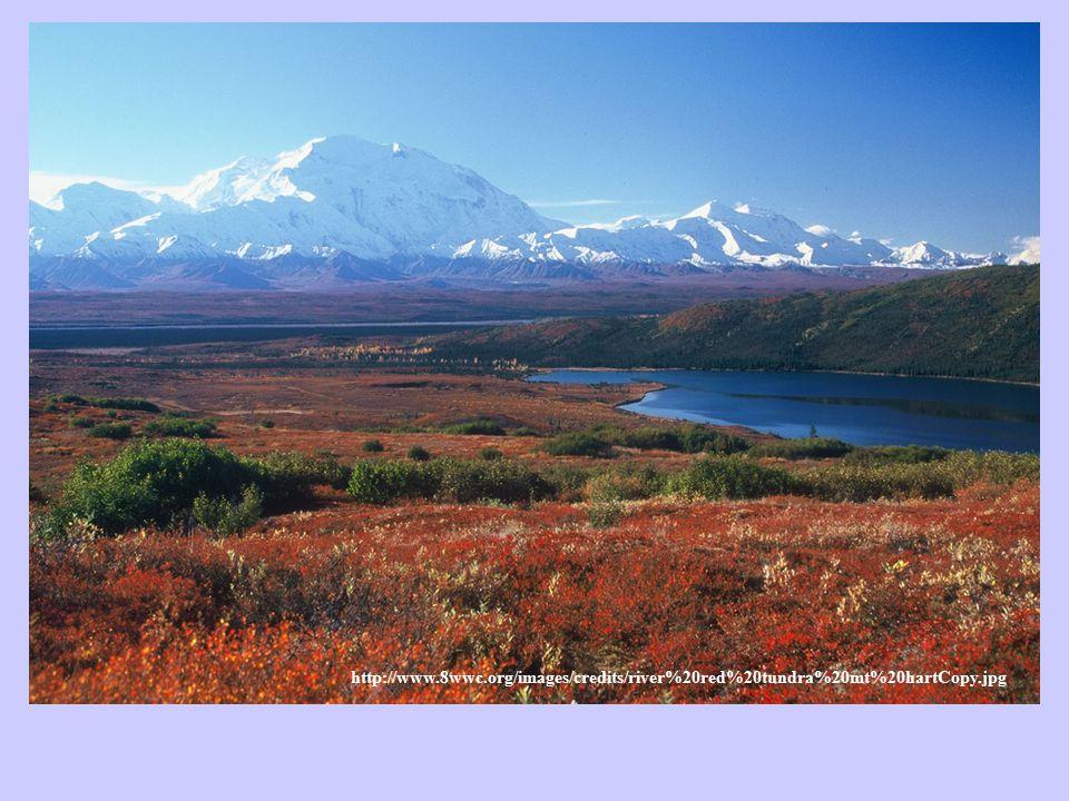Dva typy tundry Arktická - sev.