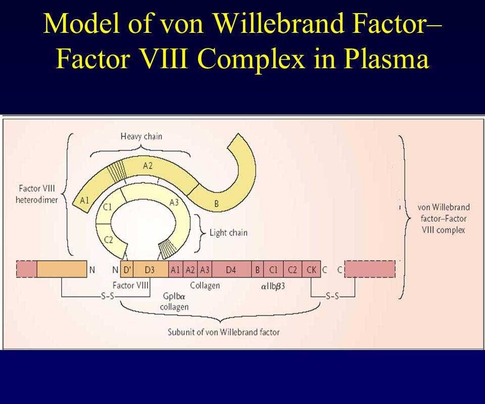 Model of von Willebrand Factor– Factor VIII Complex in Plasma
