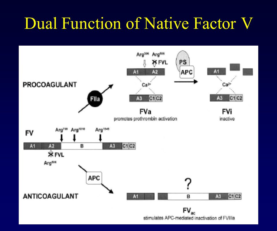 Dual Function of Native Factor V