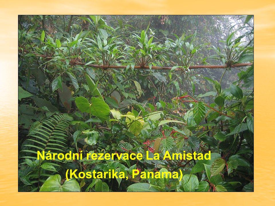 Národní rezervace La Amistad (Kostarika, Panama)
