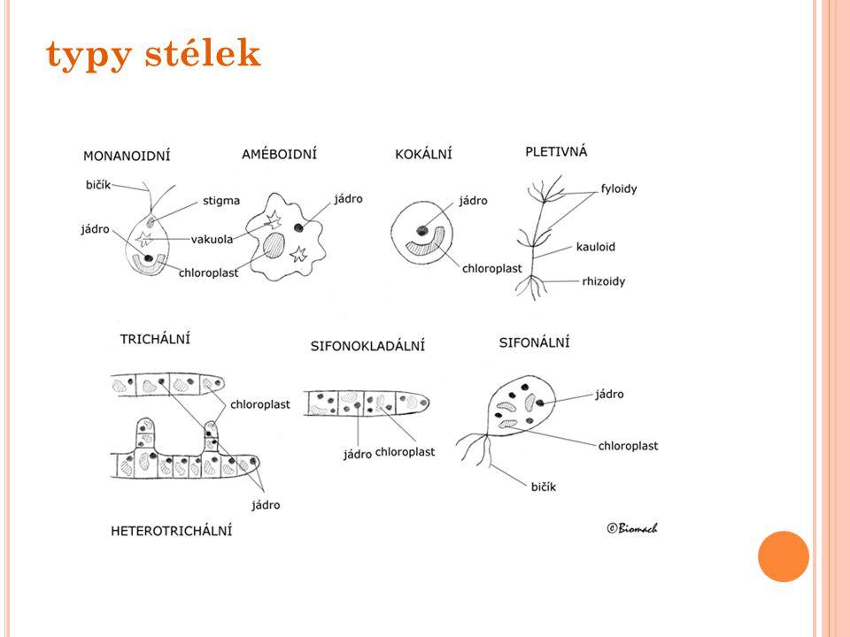 kmen: Skrytěnky - jednobuněčné dvoubičíkaté organismy, - obsahují chlorofyly a,c, karoteny, xantofyly, - fykobiliproteiny, - zásobní látka škrob - velmi odolní vůči chladu - součást fytoplanktonu