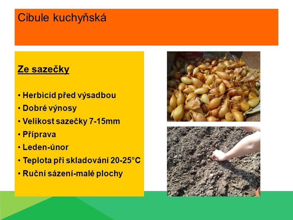 Cibule kuchyňská Ze sazečky Herbicid před výsadbou Dobré výnosy Velikost sazečky 7-15mm Příprava Leden-únor Teplota při skladování 20-25°C Ruční sázen