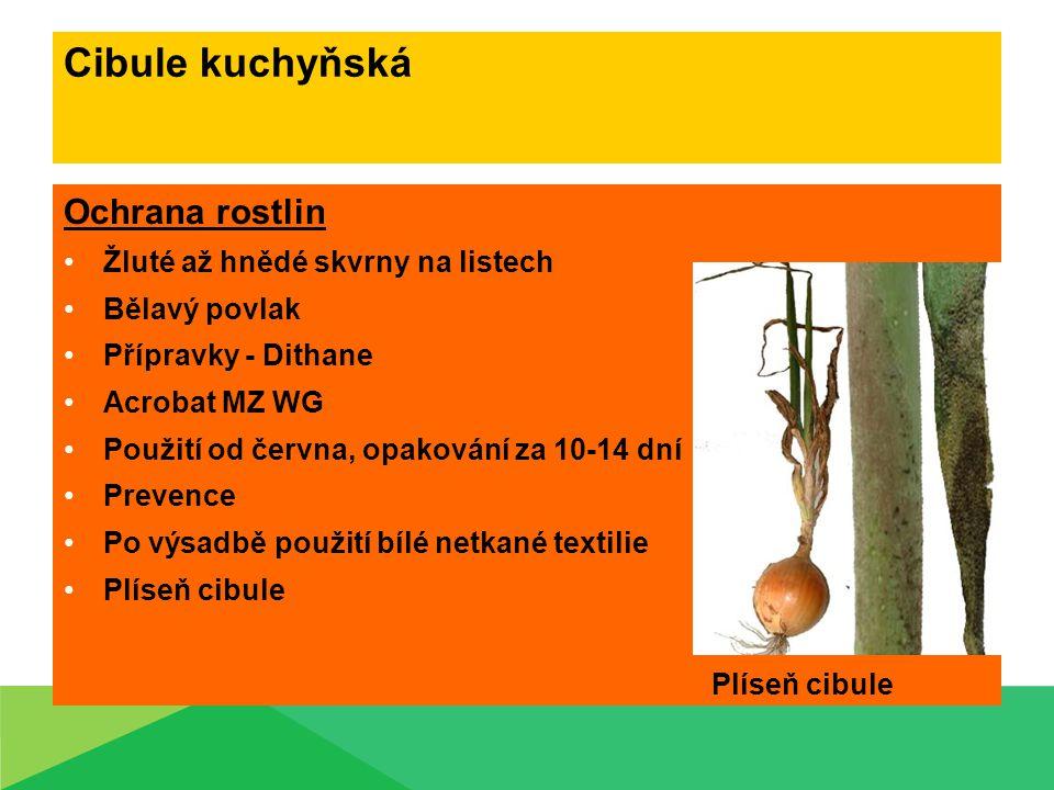 Cibule kuchyňská Ochrana rostlin Žluté až hnědé skvrny na listech Bělavý povlak Přípravky - Dithane Acrobat MZ WG Použití od června, opakování za 10-1