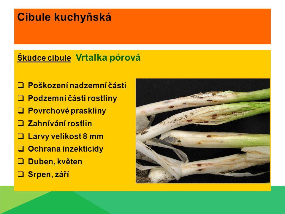 Cibule kuchyňská Škůdce cibule Vrtalka pórová  Poškození nadzemní části  Podzemní části rostliny  Povrchové praskliny  Zahnívání rostlin  Larvy v