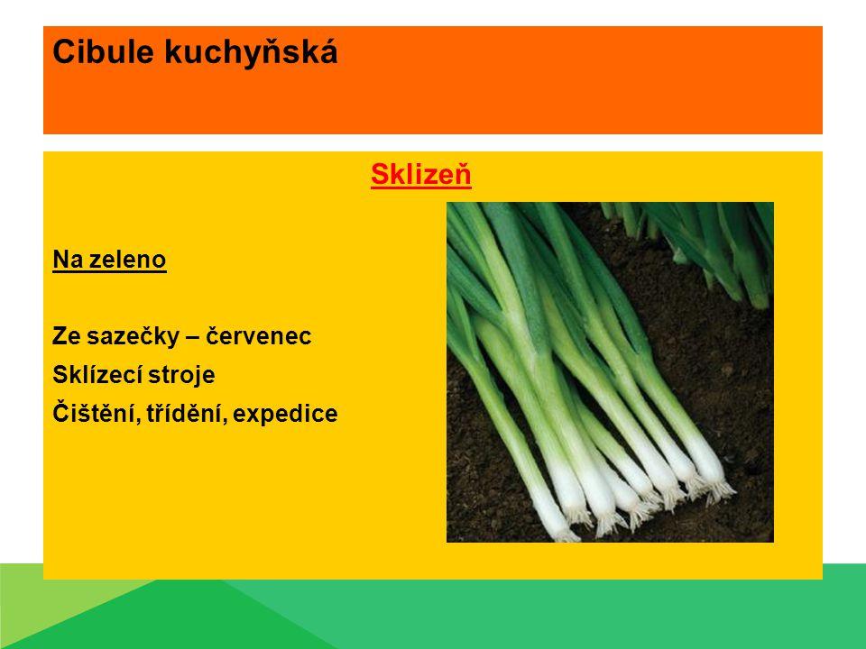 Cibule kuchyňská Sklizeň Na zeleno Ze sazečky – červenec Sklízecí stroje Čištění, třídění, expedice