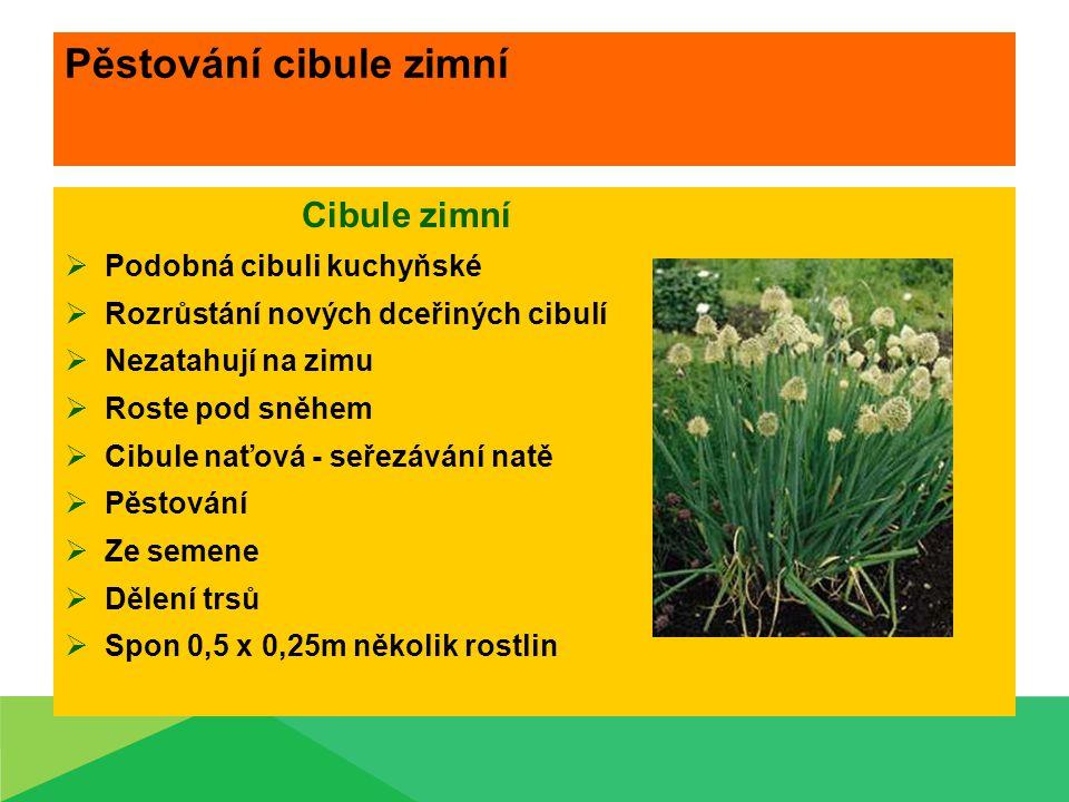 Pěstování cibule zimní Cibule zimní  Podobná cibuli kuchyňské  Rozrůstání nových dceřiných cibulí  Nezatahují na zimu  Roste pod sněhem  Cibule n