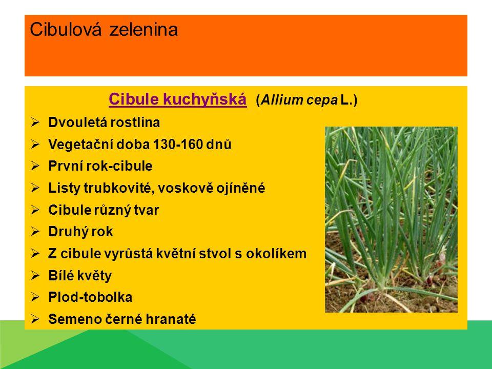 Cibulová zelenina Cibule kuchyňská (Allium cepa L.)  Dvouletá rostlina  Vegetační doba 130-160 dnů  První rok-cibule  Listy trubkovité, voskově oj