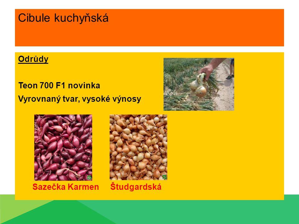 Cibule kuchyňská Nároky na prostředí Vyhovují lehké půdy, hlinito-písčité Dostatek světla Závlaha přiměřená – do poloviny vegetačního období Hnojení Minerální hnojiva – Cererit