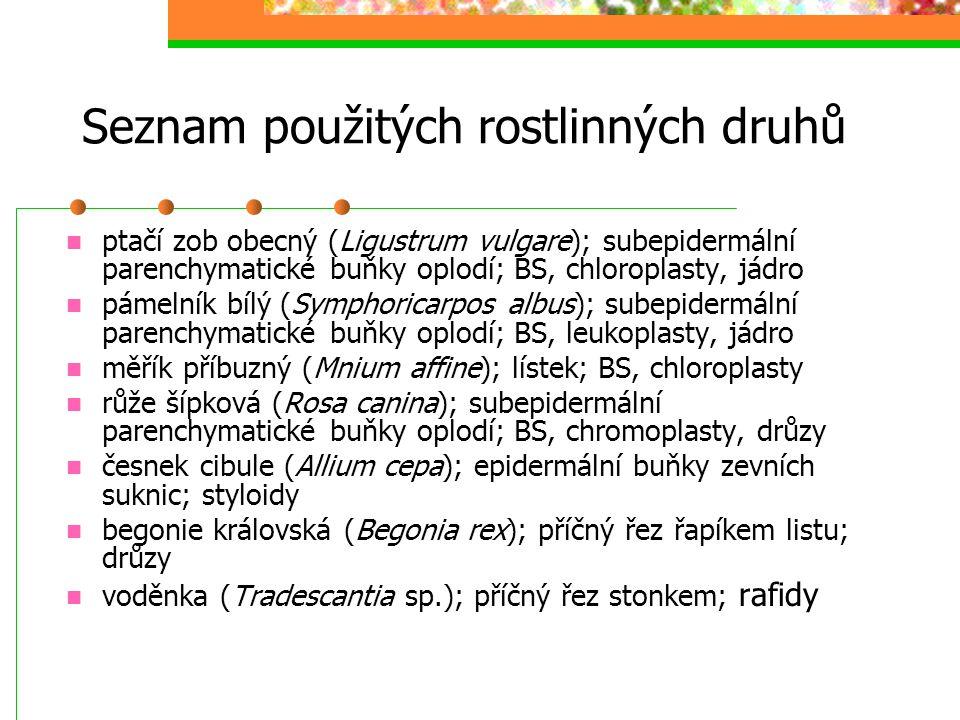 Seznam použitých rostlinných druhů ptačí zob obecný (Ligustrum vulgare); subepidermální parenchymatické buňky oplodí; BS, chloroplasty, jádro pámelník