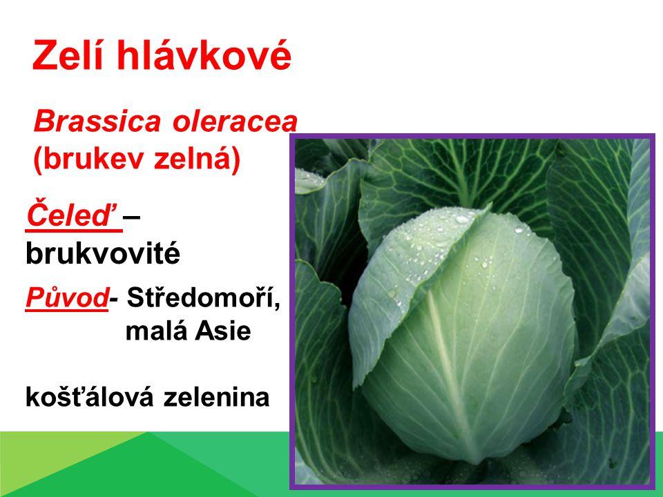 Zelí hlávkové Brassica oleracea (brukev zelná) Čeleď – brukvovité Původ- Středomoří, malá Asie košťálová zelenina