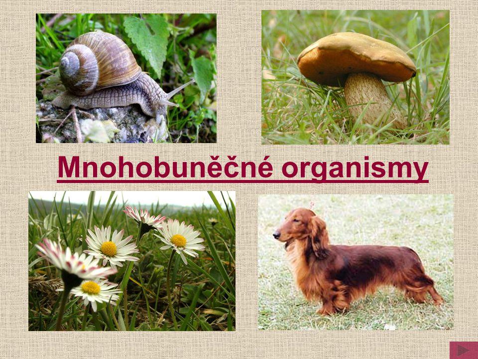 Stavba těla živočichů Stavba těla rostlin Pojmy Porovnání Nižší rostliny a houby