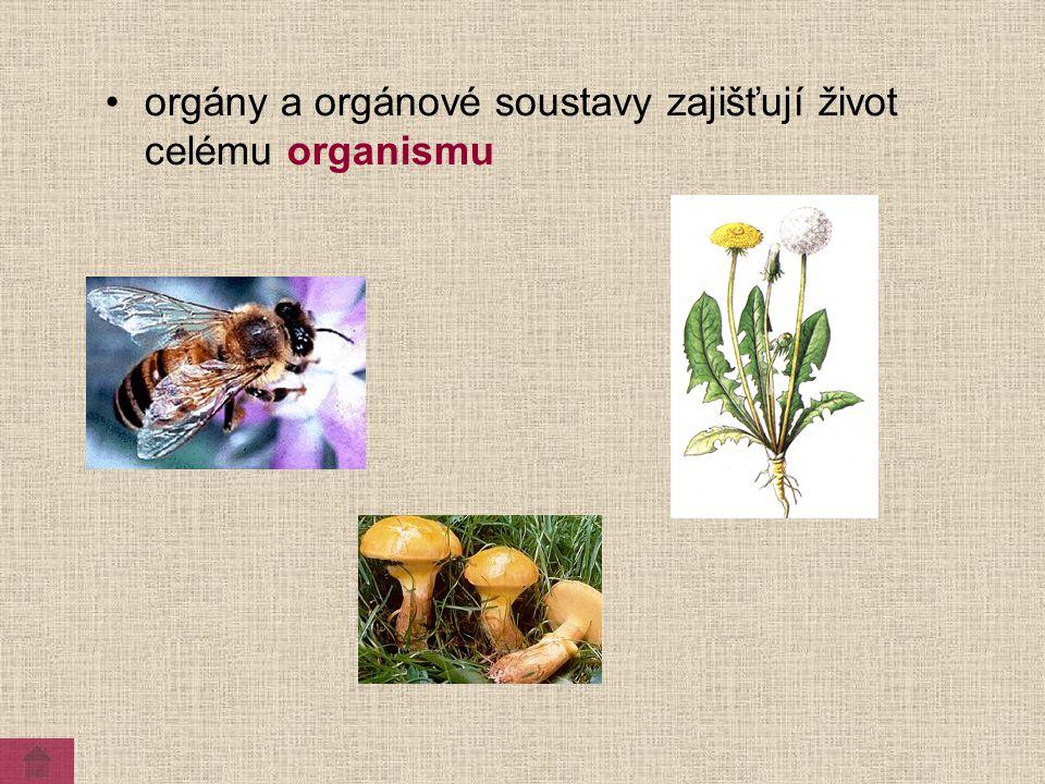 organismus orgánová soustava orgán tkáň buňka Stavba těla živočichů