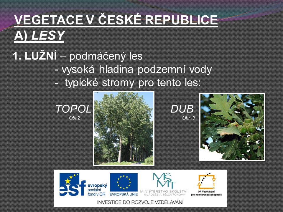 VEGETACE V ČESKÉ REPUBLICE A) LESY 1. LUŽNÍ – podmáčený les - vysoká hladina podzemní vody - typické stromy pro tento les: TOPOL DUB Obr.2Obr. 3