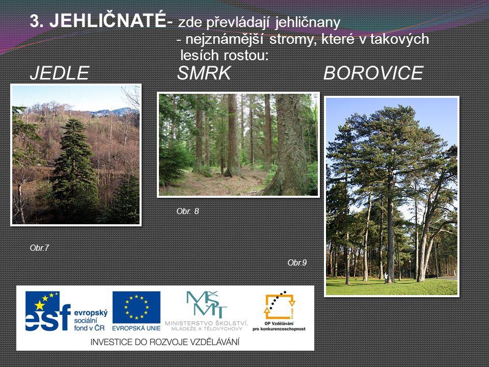 3. JEHLIČNATÉ - zde převládají jehličnany - nejznámější stromy, které v takových lesích rostou: JEDLESMRKBOROVICE Obr. 8 Obr.7 Obr.9