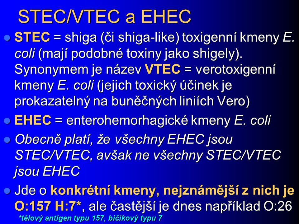 STEC/VTEC a EHEC STEC = shiga (či shiga-like) toxigenní kmeny E. coli (mají podobné toxiny jako shigely). Synonymem je název VTEC = verotoxigenní kmen