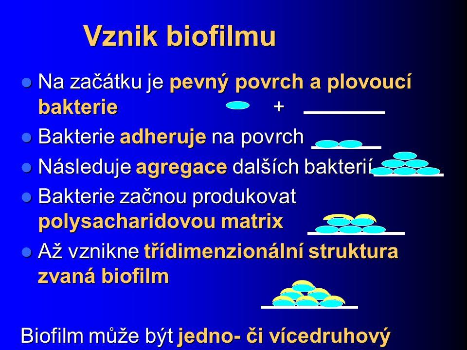 Vznik biofilmu Na začátku je pevný povrch a plovoucí bakterie + Na začátku je pevný povrch a plovoucí bakterie + Bakterie adheruje na povrch Bakterie