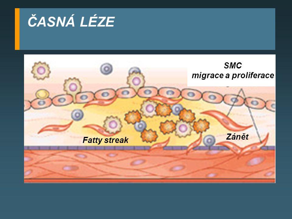 ČASNÁ LÉZE SMC migrace a proliferace Zánět Fatty streak