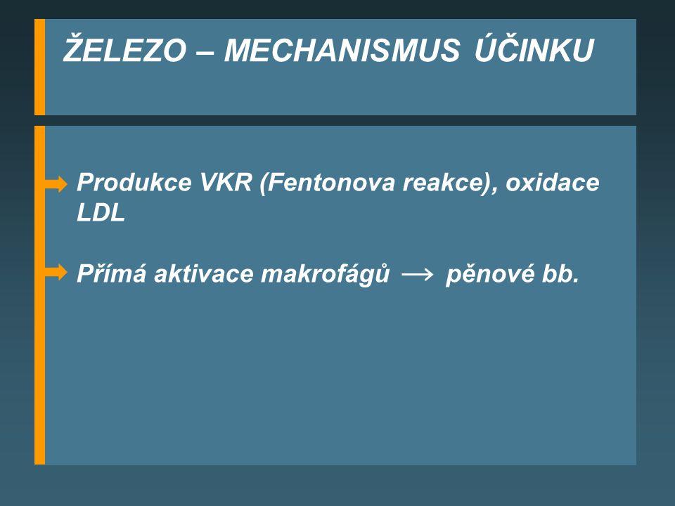 ŽELEZO – MECHANISMUS ÚČINKU Produkce VKR (Fentonova reakce), oxidace LDL Přímá aktivace makrofágů pěnové bb.