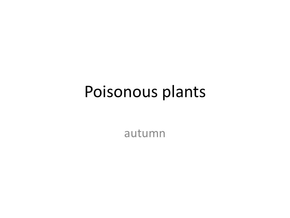 Poisonous plants autumn