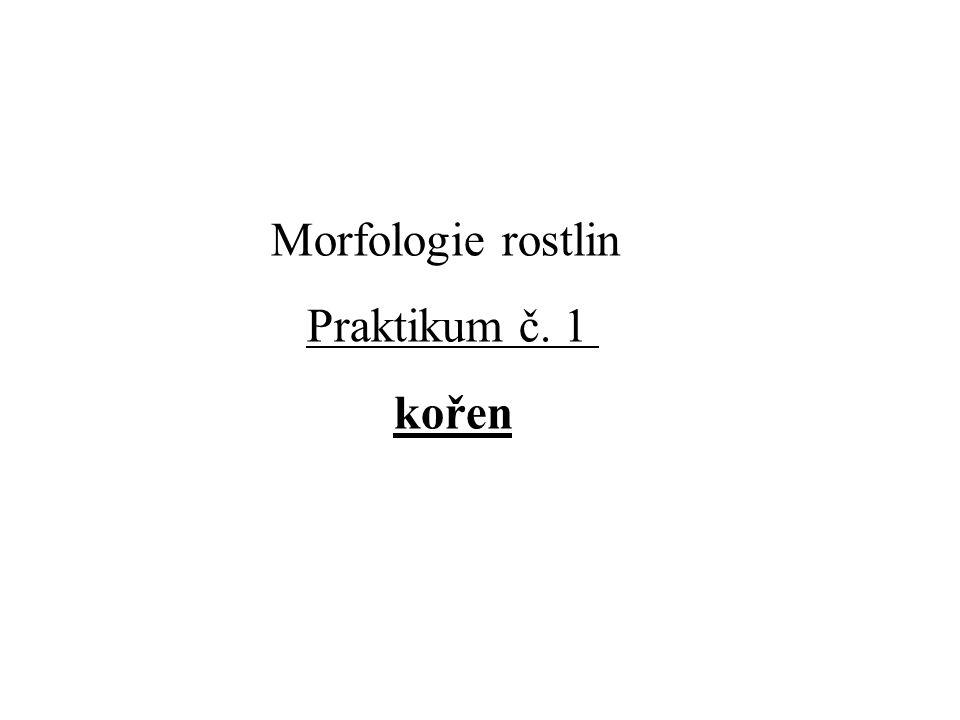 Morfologie rostlin Praktikum č. 1 kořen