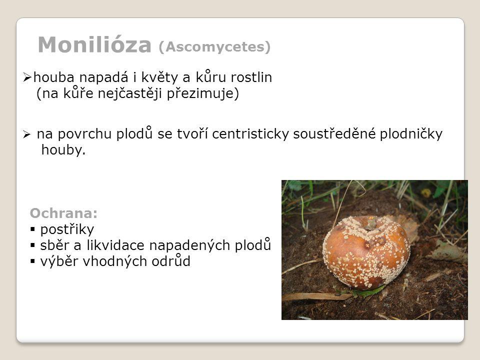  na povrchu plodů se tvoří centristicky soustředěné plodničky houby.  houba napadá i květy a kůru rostlin (na kůře nejčastěji přezimuje) Ochrana: 