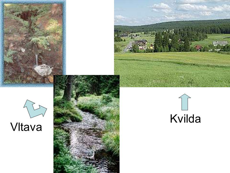 Vltava Kvilda