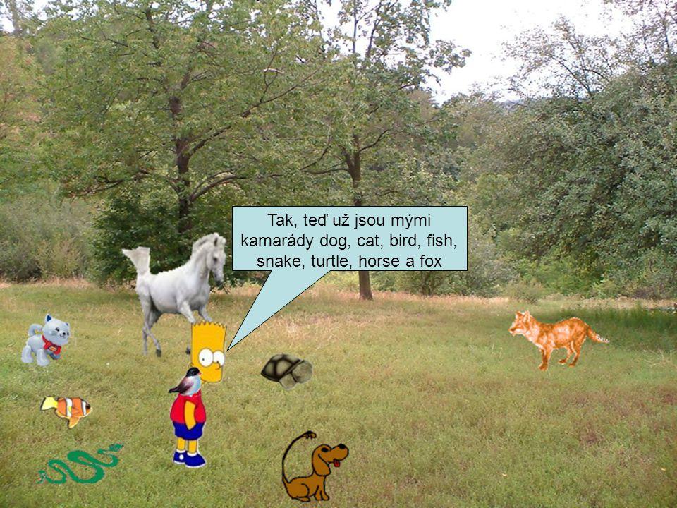 Tak, teď už jsou mými kamarády dog, cat, bird, fish, snake, turtle, horse a fox