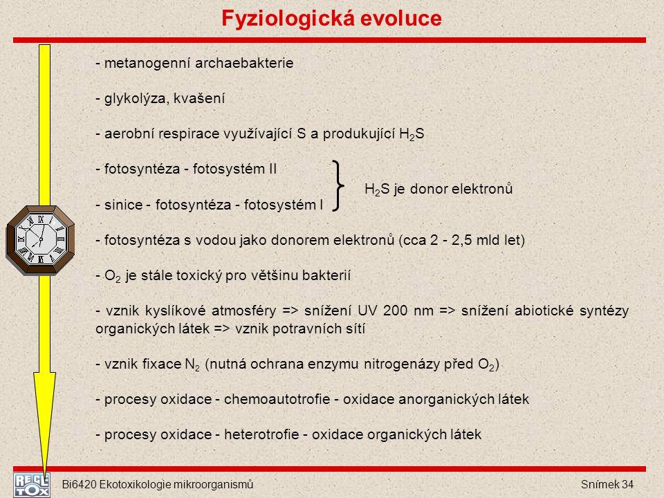 Bi6420 Ekotoxikologie mikroorganismů Snímek 34 - metanogenní archaebakterie - glykolýza, kvašení - aerobní respirace využívající S a produkující H 2 S