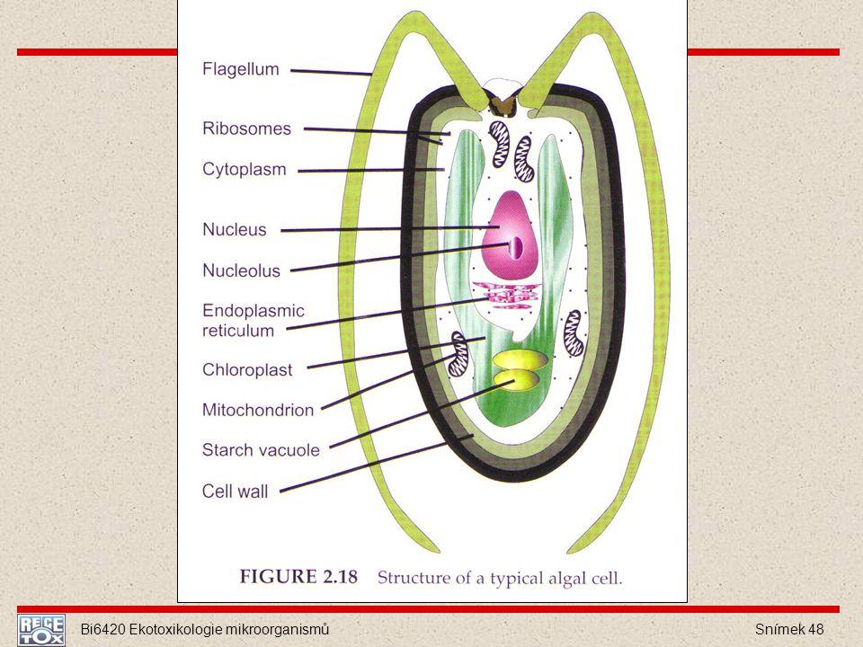 Bi6420 Ekotoxikologie mikroorganismů Snímek 48