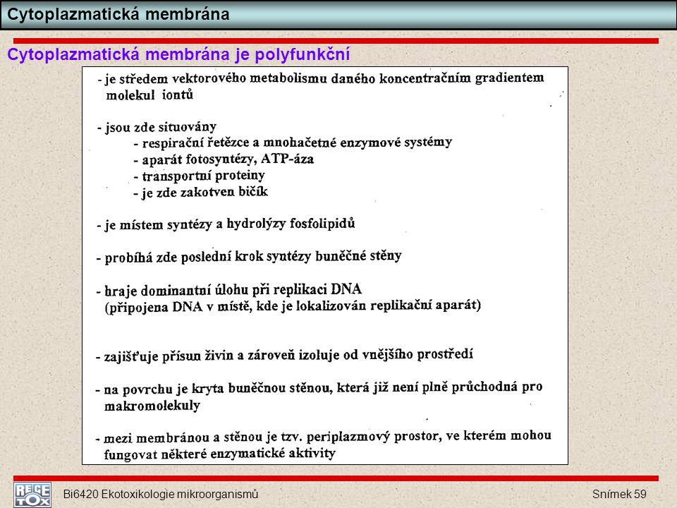 Bi6420 Ekotoxikologie mikroorganismů Snímek 59 Cytoplazmatická membrána je polyfunkční Cytoplazmatická membrána