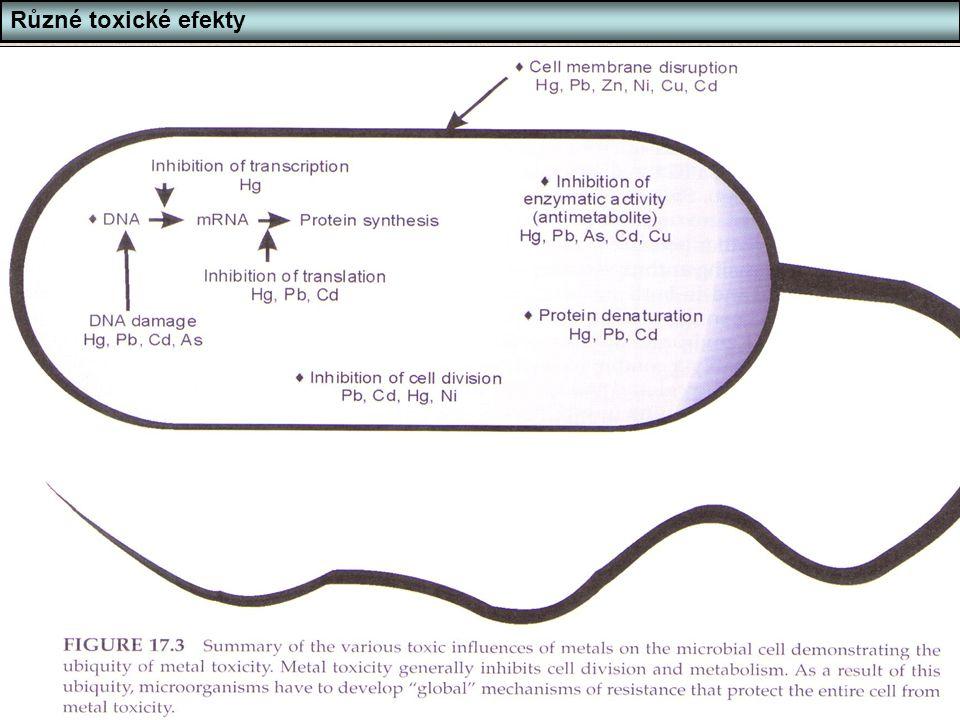 Bi6420 Ekotoxikologie mikroorganismů Snímek 66 66 Různé toxické efekty Působení toxických látek - příklad těžké kovy