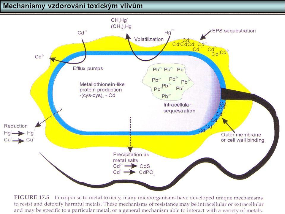 Bi6420 Ekotoxikologie mikroorganismů Snímek 67 67 Mechanismy vzdorování toxickým vlivům Tolerance - mechanismy rezistance vůči těžkým kovům