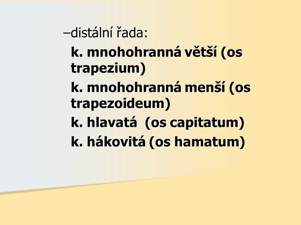 –distální řada: k. mnohohranná větší (os trapezium) k. mnohohranná menší (os trapezoideum) k. hlavatá (os capitatum) k. hákovitá (os hamatum)