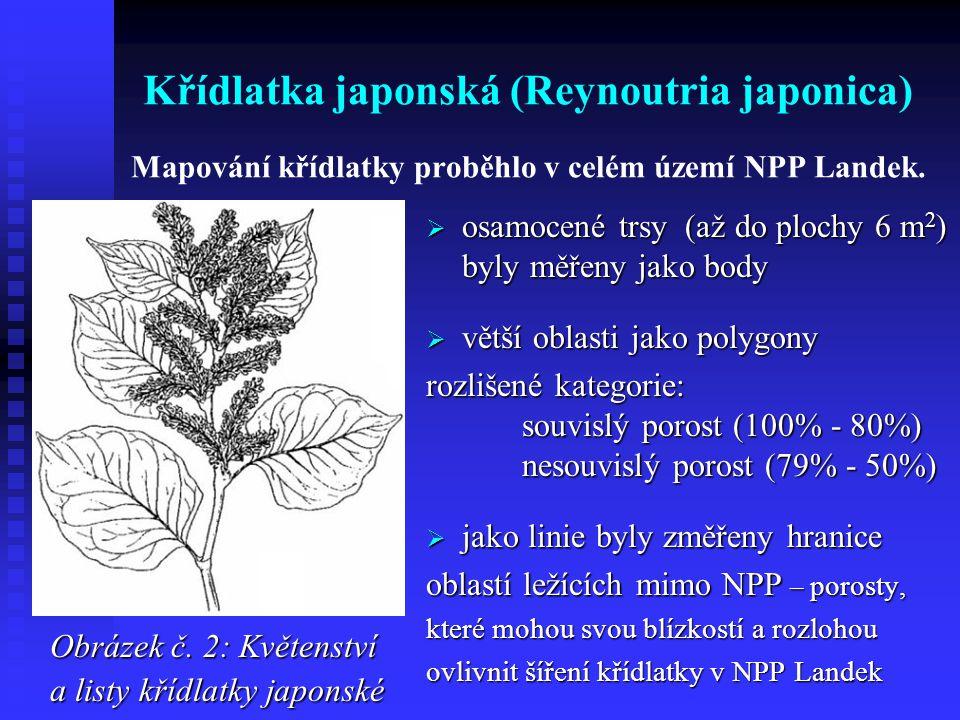 Křídlatka japonská (Reynoutria japonica) Mapování křídlatky proběhlo v celém území NPP Landek.