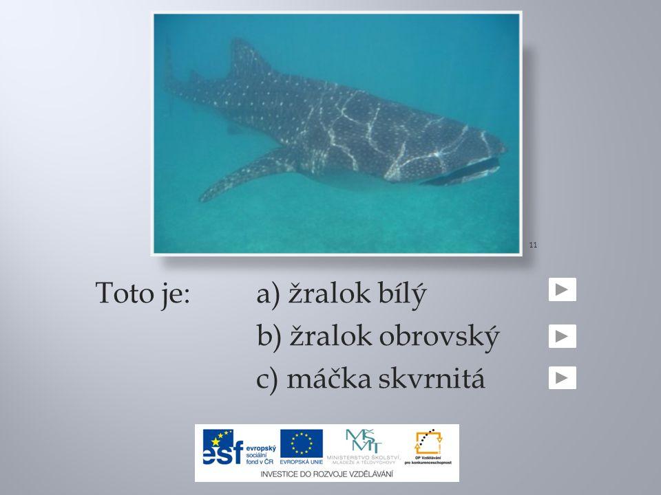 Toto je:a) žralok bílý b) žralok obrovský c) máčka skvrnitá 11