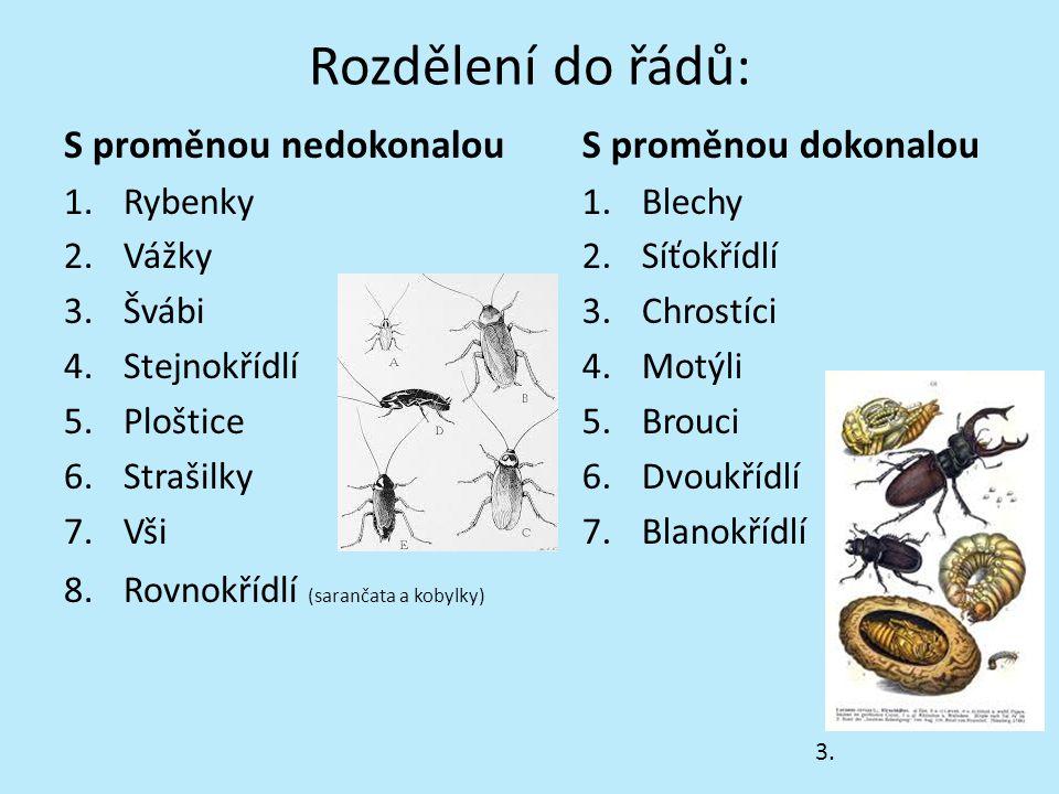 Stavba těla hmyzu hlava – tykadla, ústní ústrojí, pár složených očí, někdy jednoduchá očka (až 4) hruď – 3 páry článkovaných končetin, 2 páry křídel zadeček – uvnitř je srdce, většina trávicího ústrojí, vylučovací a pohlavní orgány Č.1