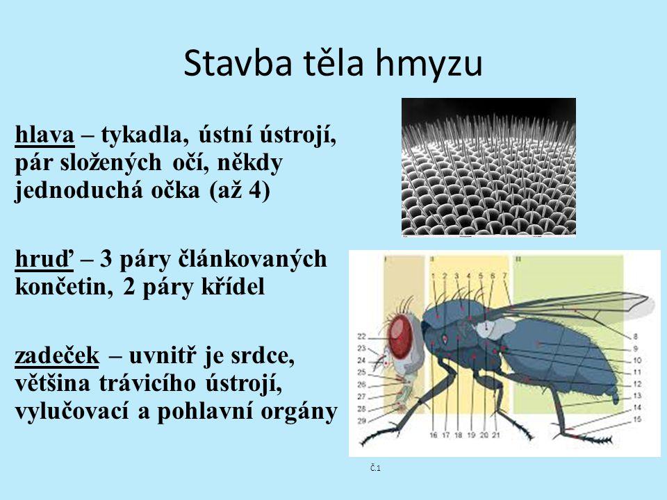 Ústní ústrojí: Kousací (brouk) Lízací (moucha) Bodavě sací (komár Sací (motýl)