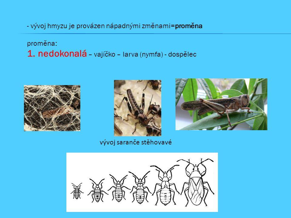 - vývoj hmyzu je provázen nápadnými změnami=proměna proměna: 1.nedokonalá – vajíčko – larva (nymfa) - dospělec vývoj saranče stěhovavé