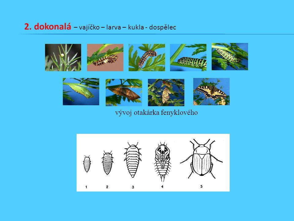 2. dokonalá – vajíčko – larva – kukla - dospělec vývoj otakárka fenyklového