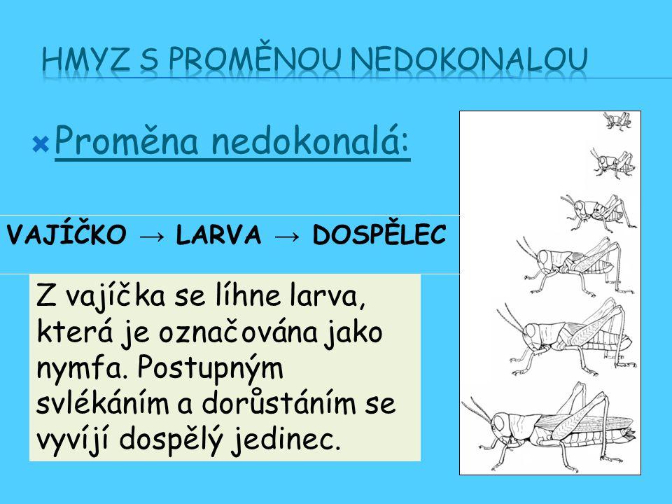  Proměna nedokonalá: VAJÍČKO → LARVA → DOSPĚLEC Z vajíčka se líhne larva, která je označována jako nymfa.
