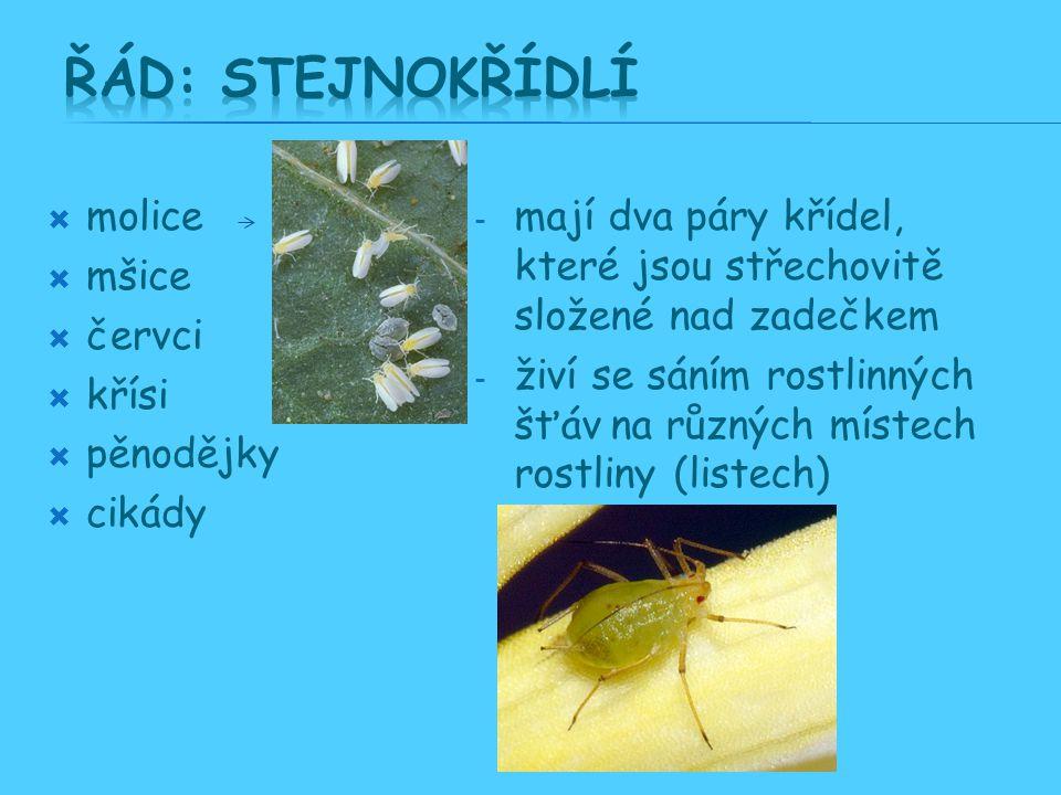  molice  mšice  červci  křísi  pěnodějky  cikády - mají dva páry křídel, které jsou střechovitě složené nad zadečkem - živí se sáním rostlinných šťáv na různých místech rostliny (listech) květech, atd..)