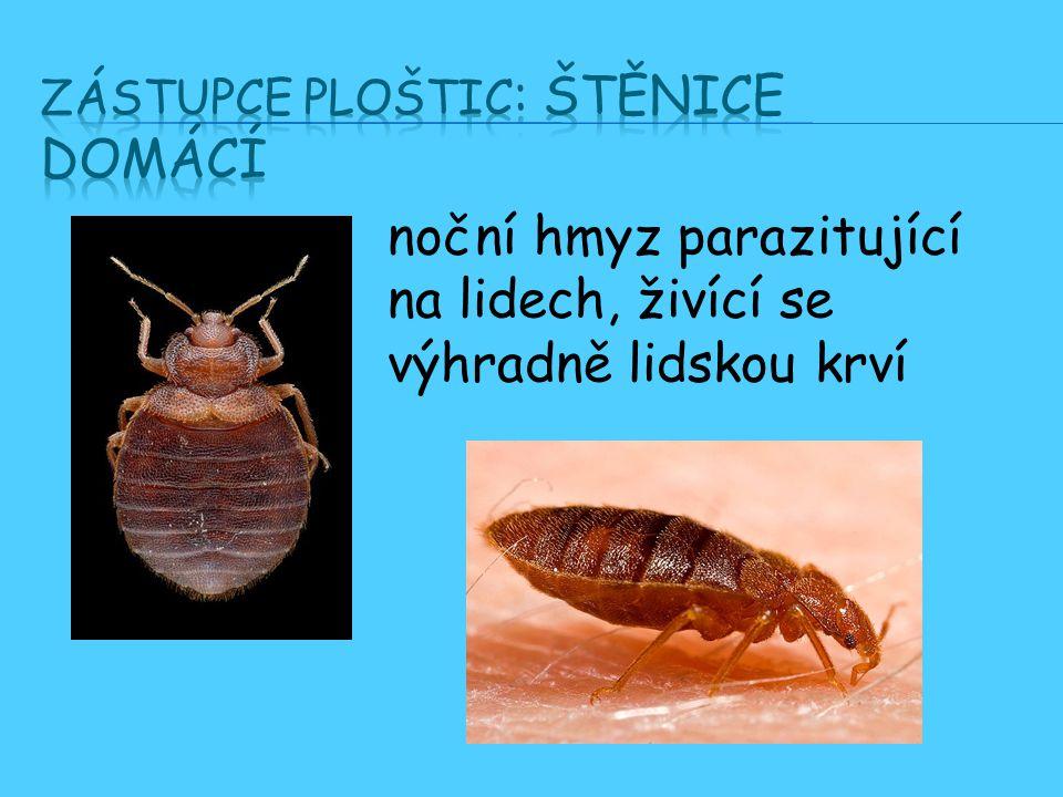 noční hmyz parazitující na lidech, živící se výhradně lidskou krví