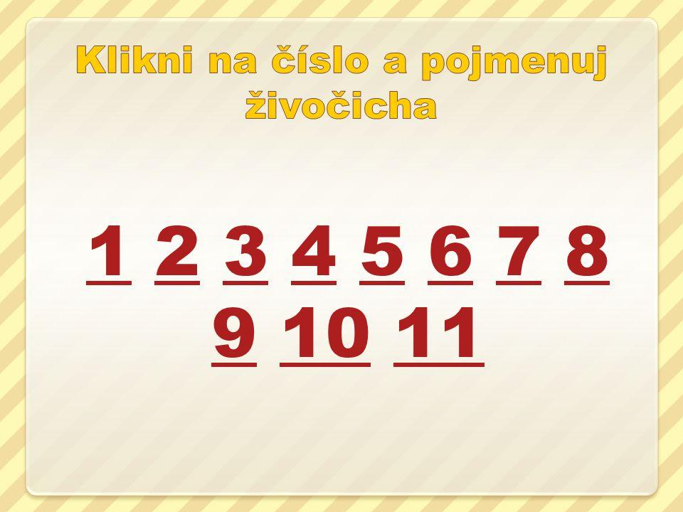 11 2 3 4 5 6 7 8 9 10 112345678 91011