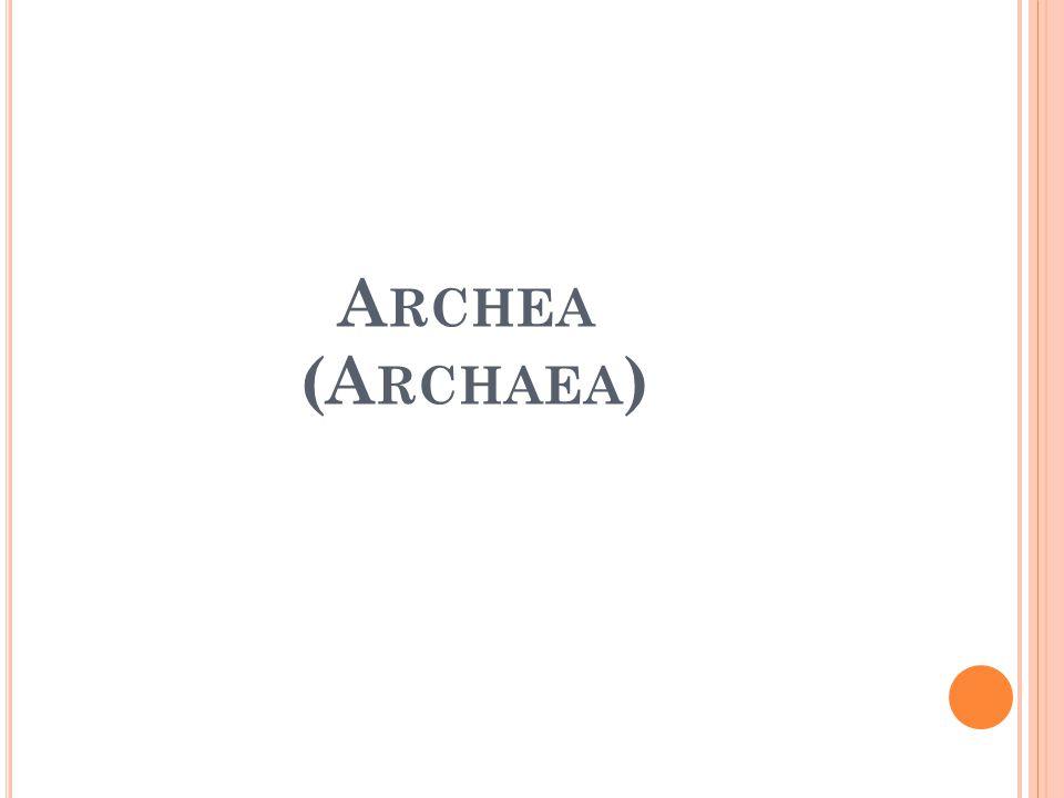 A RCHEA (A RCHAEA )