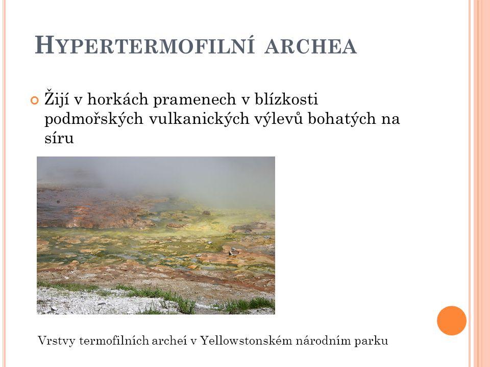 H YPERTERMOFILNÍ ARCHEA Žijí v horkách pramenech v blízkosti podmořských vulkanických výlevů bohatých na síru Vrstvy termofilních archeí v Yellowstonském národním parku