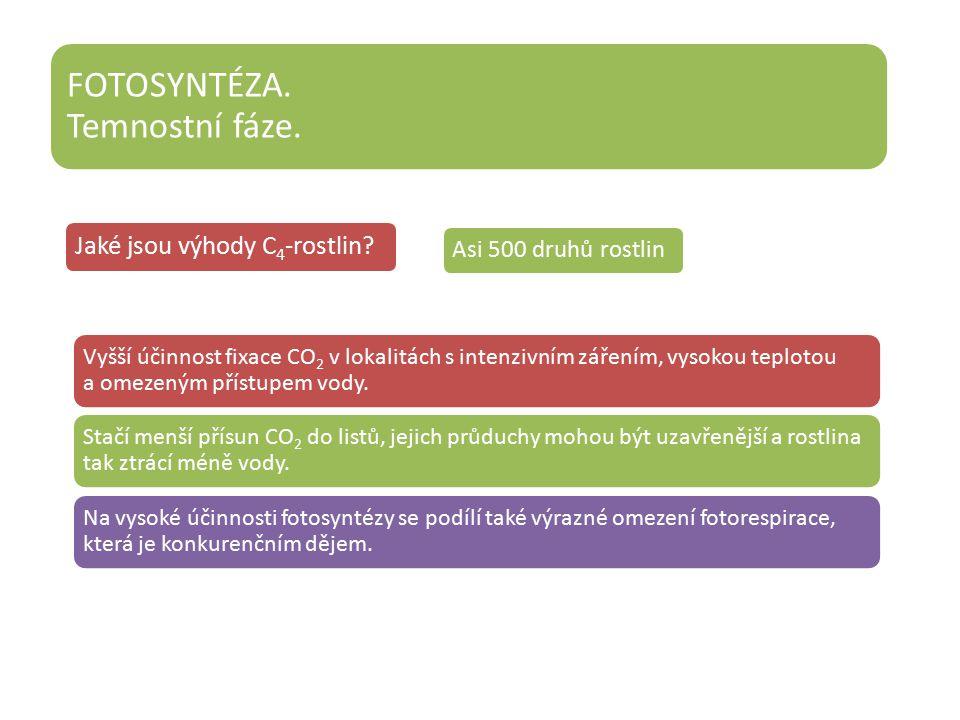 Jaké jsou výhody C4-rostlin.