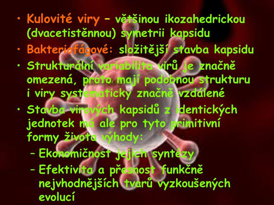 Kulovité viry – většinou ikozahedrickou (dvacetistěnnou) symetrii kapsidu Bakteriofágové: složitější stavba kapsidu Strukturální variabilita virů je z