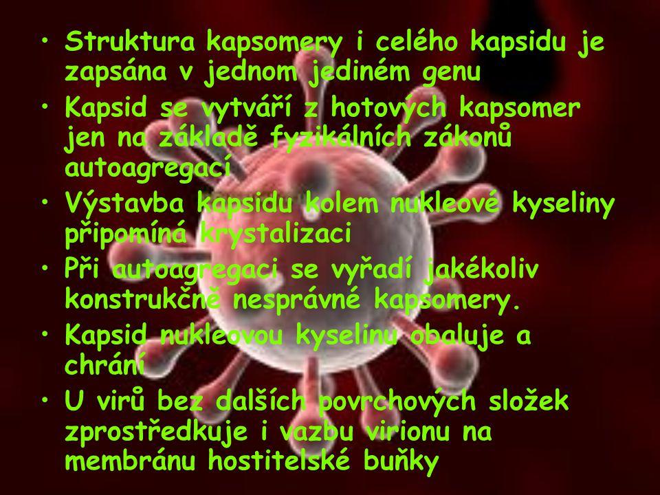 Struktura kapsomery i celého kapsidu je zapsána v jednom jediném genu Kapsid se vytváří z hotových kapsomer jen na základě fyzikálních zákonů autoagre